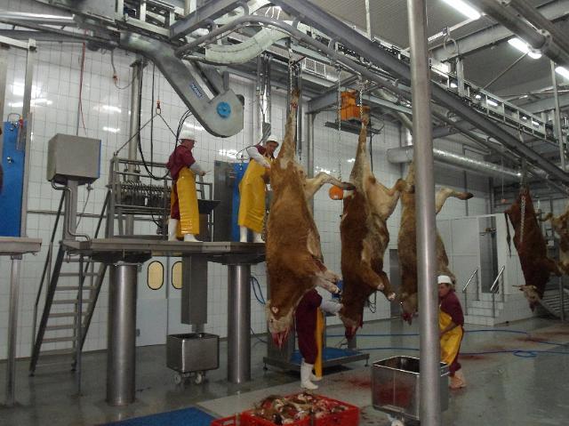 Убой животных и первичная переработка мясного сырья