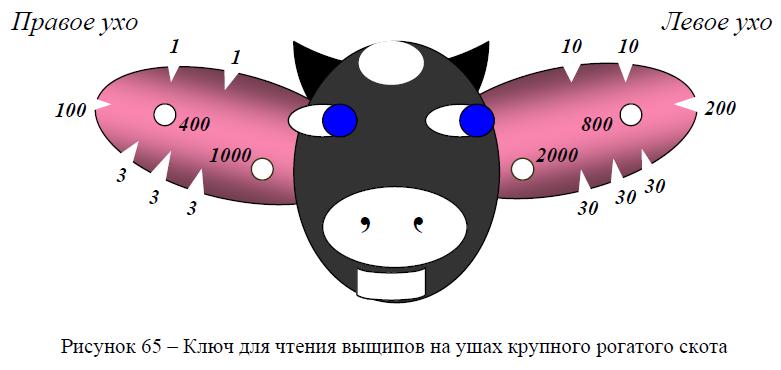 Ключ для чтения выщнпов на ушах крупного рогатого скота