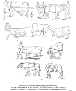 Способы повала крупного рогатого скота
