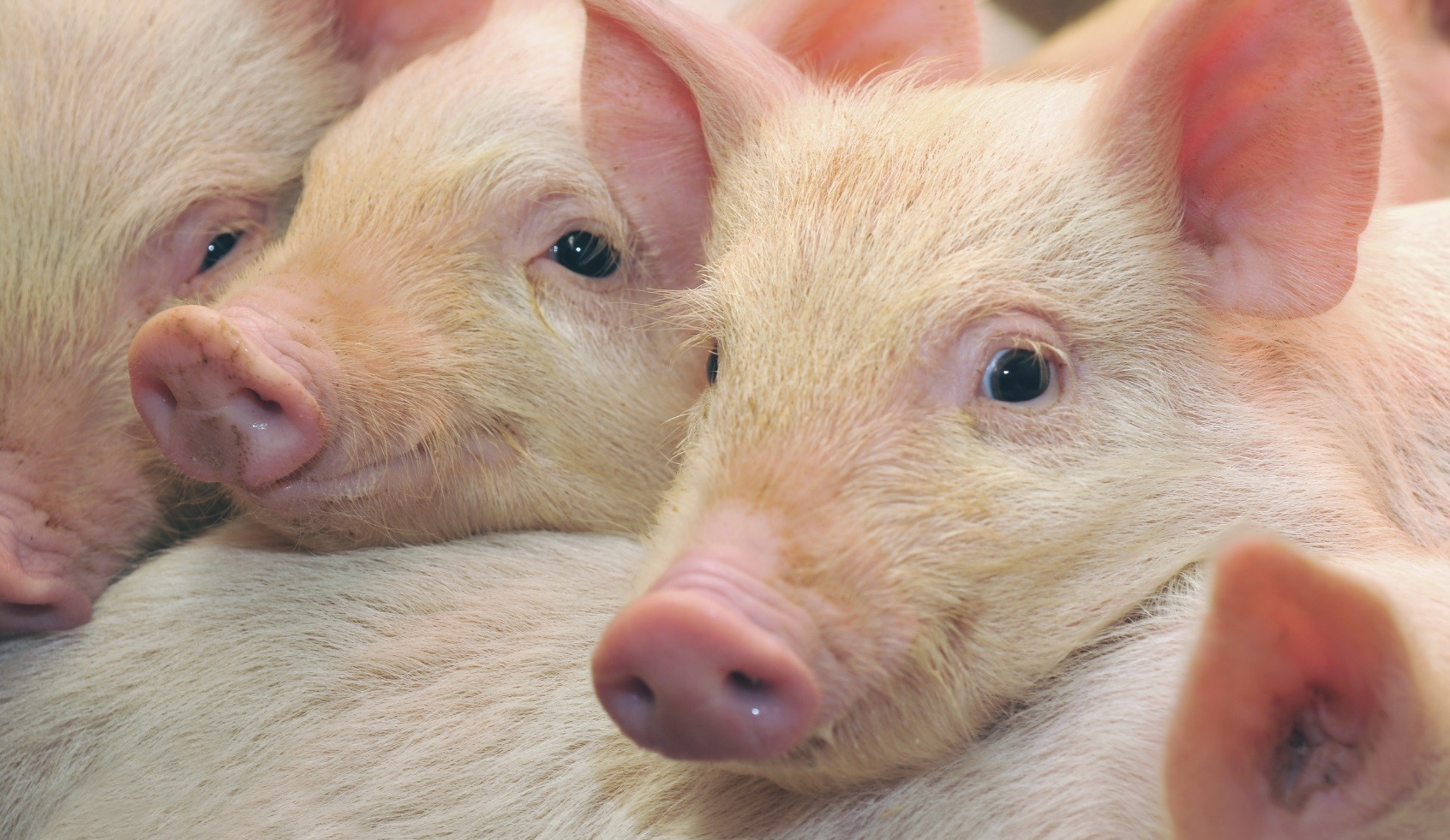 Понятие о зоотехнии как науке о животноводстве, её связь с другими науками