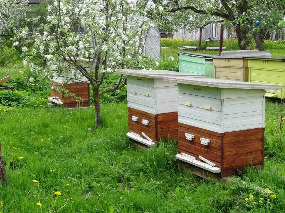 Содержание пчёл