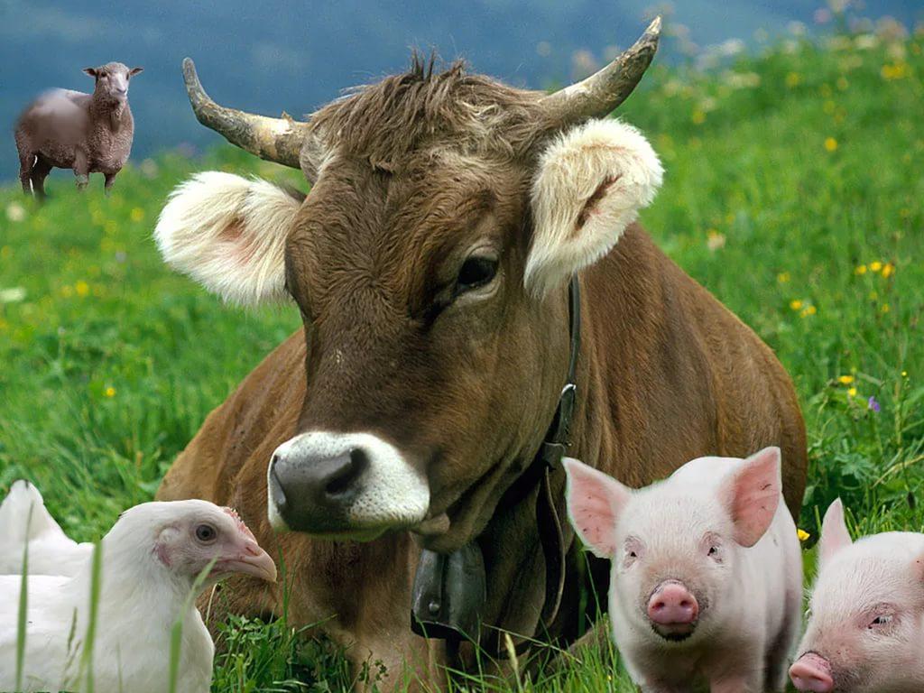 Организация производства в животноводстве