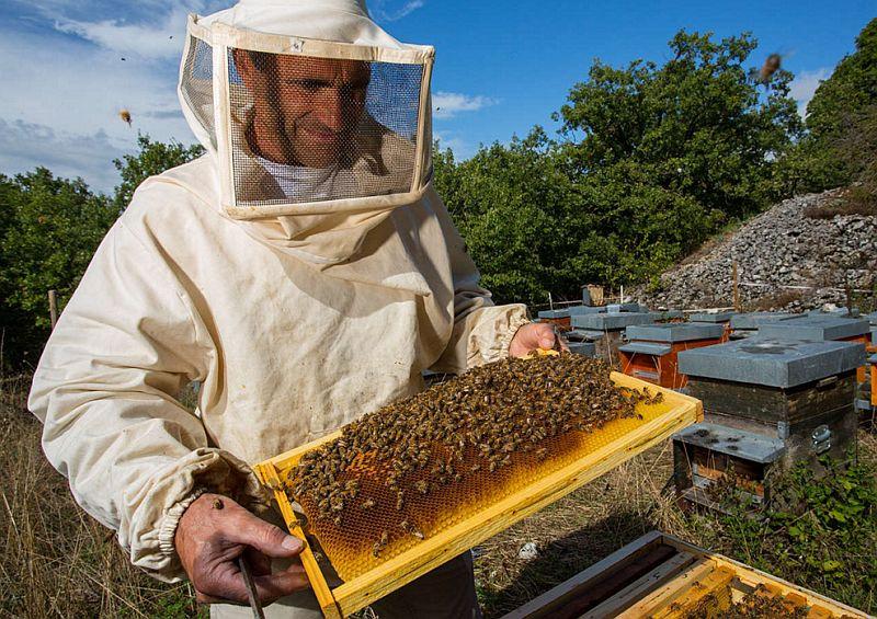 Правила безопасной работы в пчеловодстве