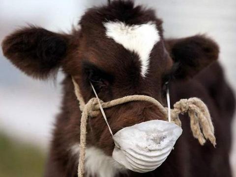 Ветеринарно-санитарные мероприятия в животноводстве