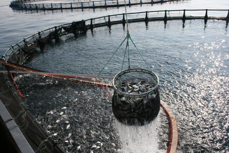 Борьба с вредителями и сорной рыбой в рыбоводстве