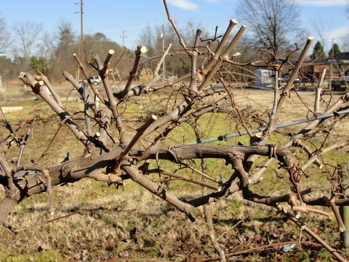 Утилизация виноградной лозы