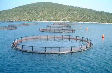 Практические аспекты форелеводства – выращивание сеголетков, товарной рыбы