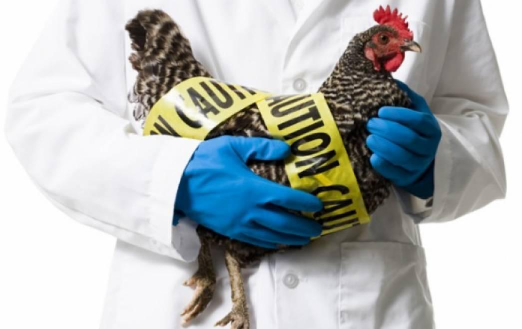Факты о гриппе птиц