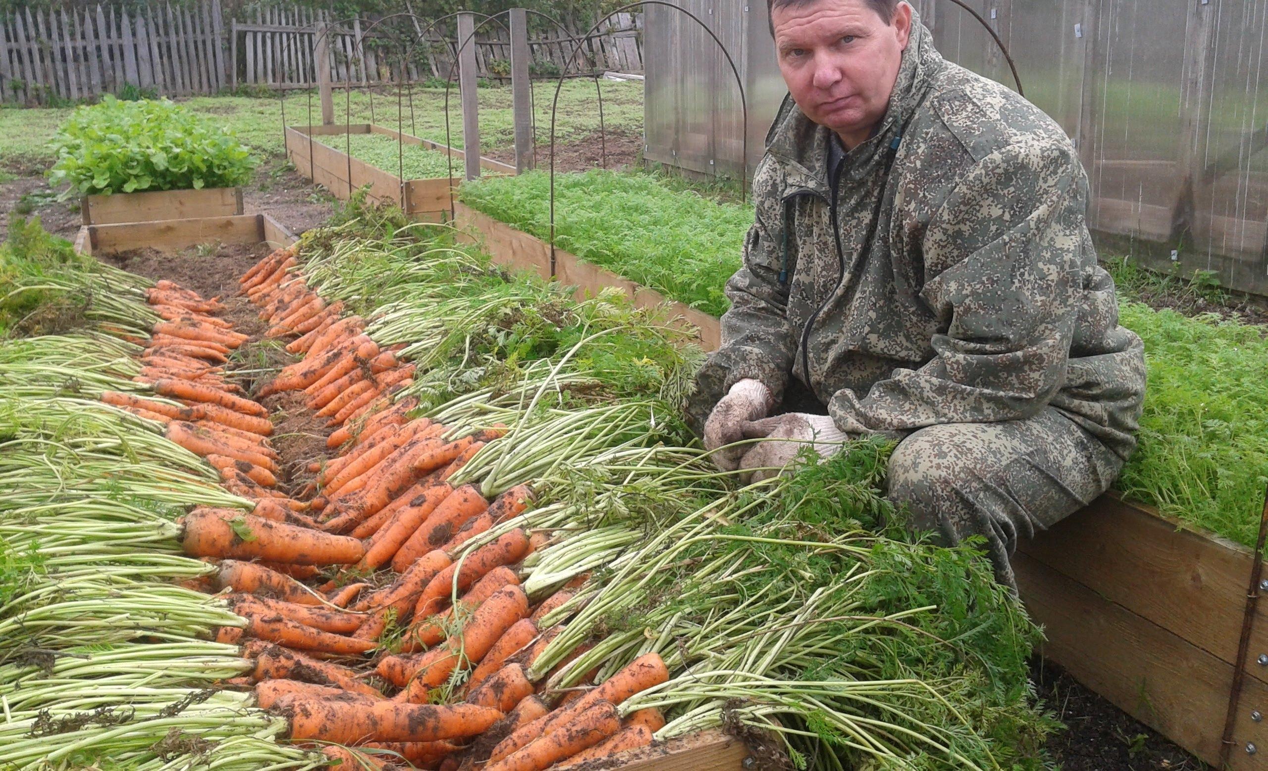Как грамотно посеять морковь