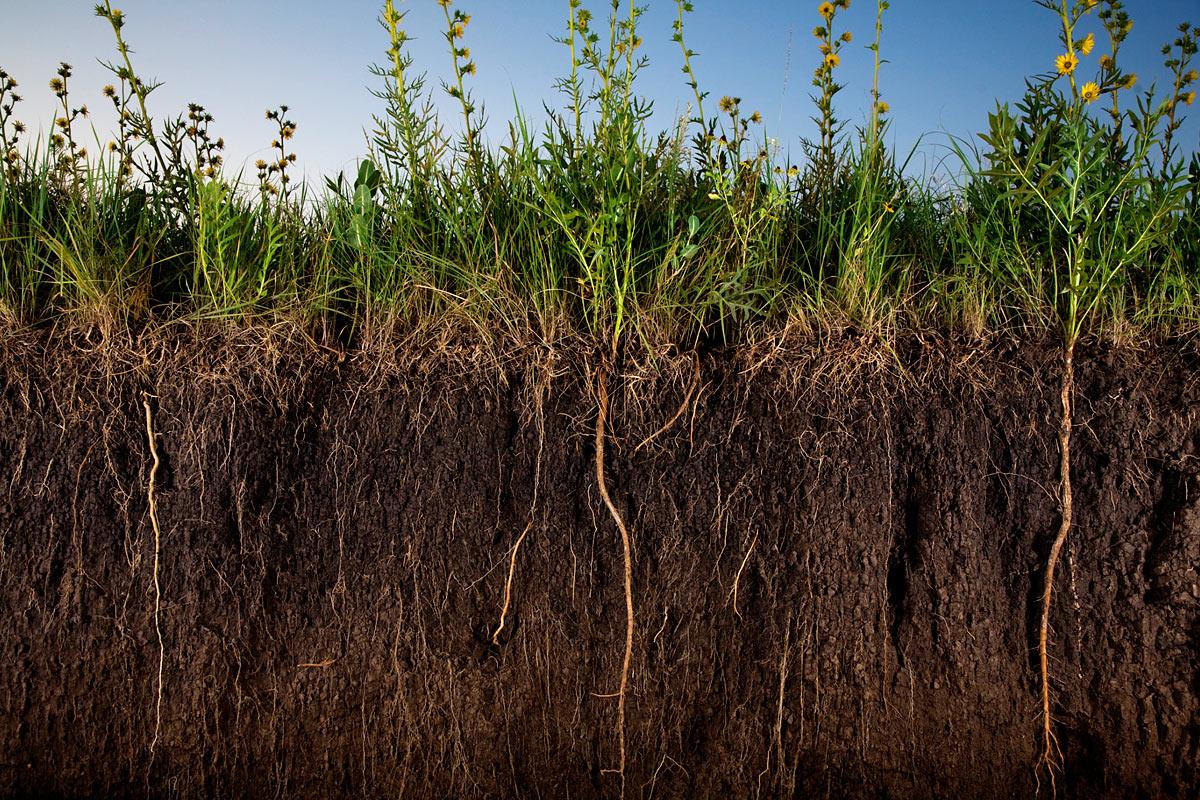 Что такое природное земледелие
