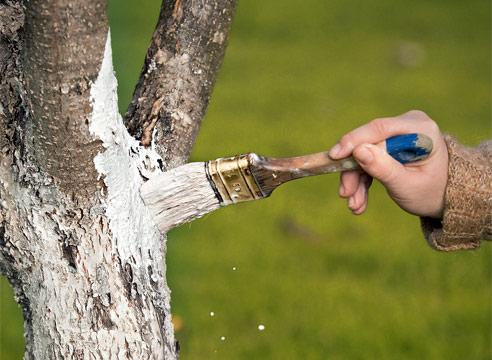 Как ухаживать за корой дерева