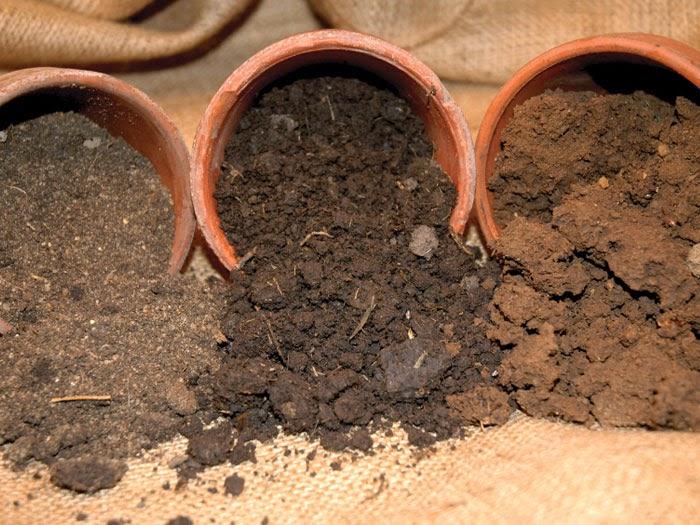 Выбор растений под характеристики почвы