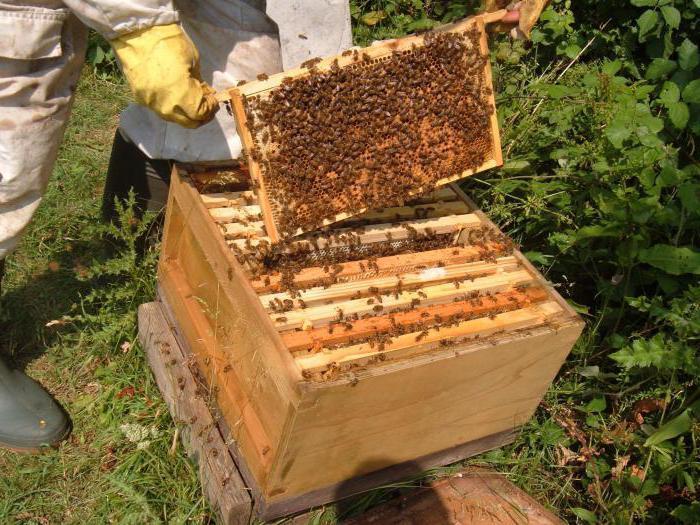 Получение и первичная переработка продукции пчеловодства