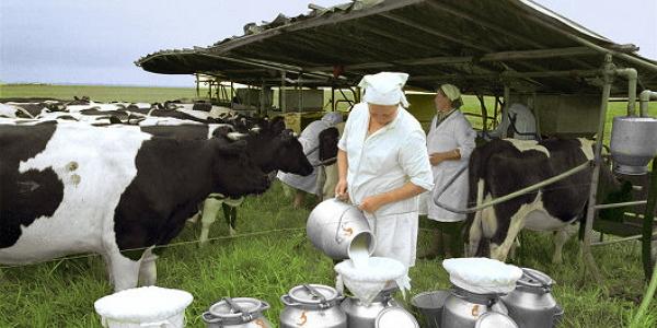 Получение и первичная переработка молока