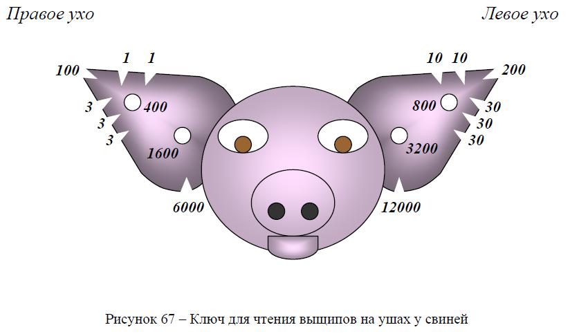 Ключ для чтения выщипов на ушах у свиней