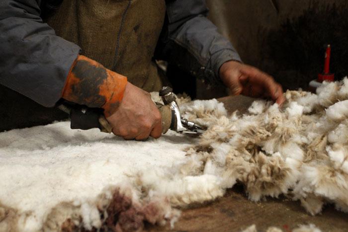 Шерстная, смушковая, шубная и меховая продуктивность