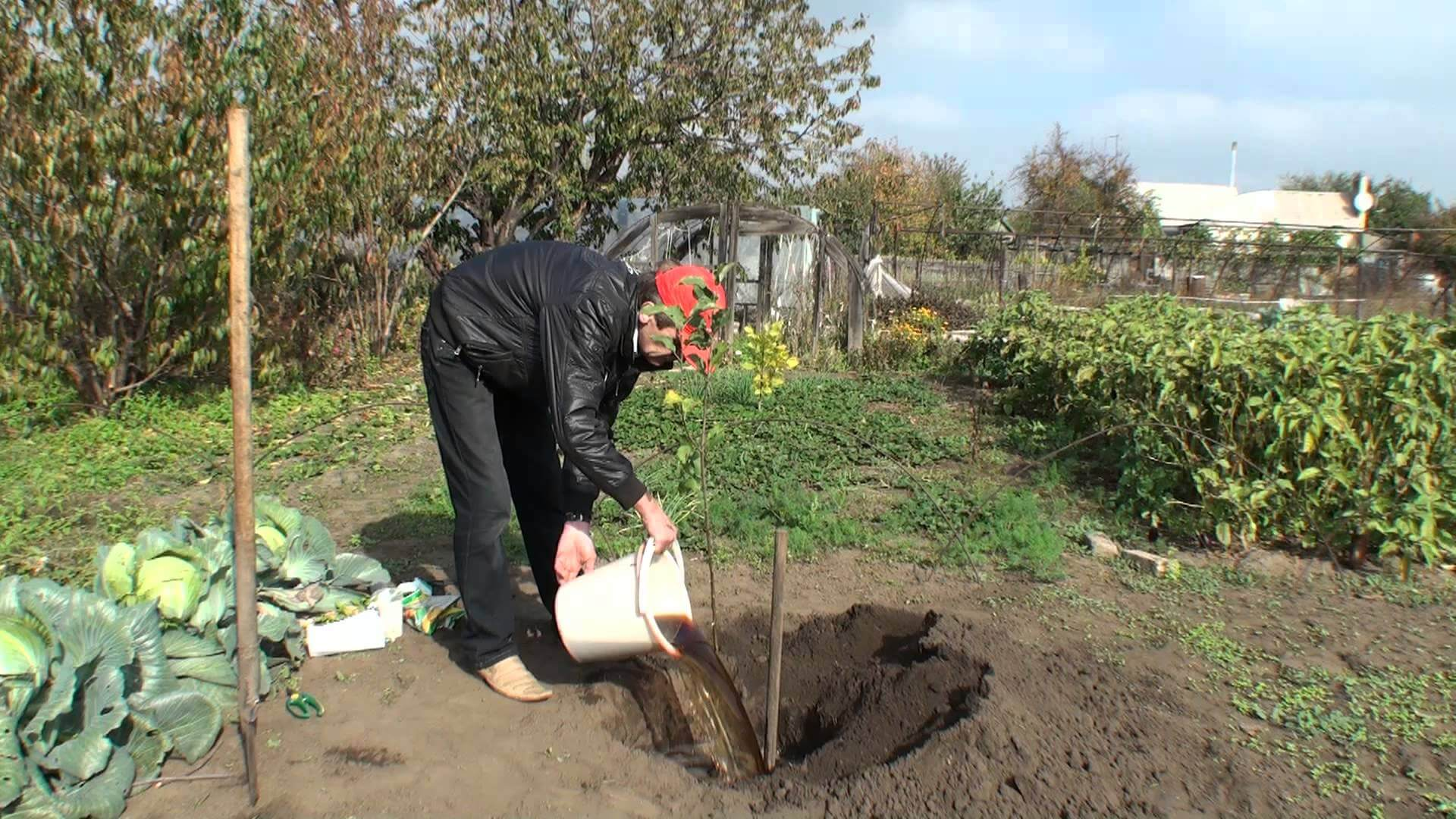 Как и когда сажать плодовые деревья в саду?