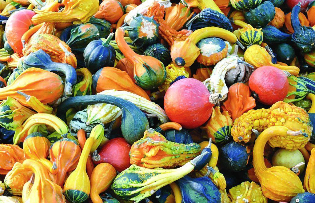 Декоративные тыквы и лагенарии: как вырастить