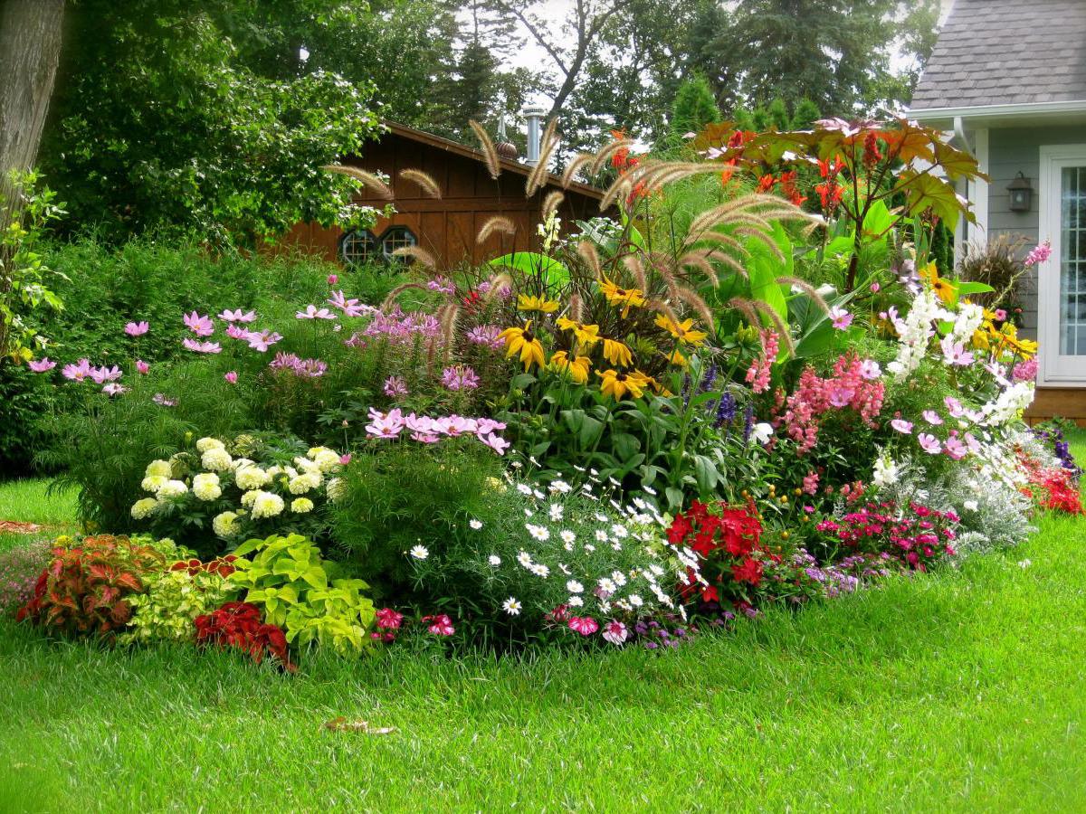 Создание сада непрерывного цветения